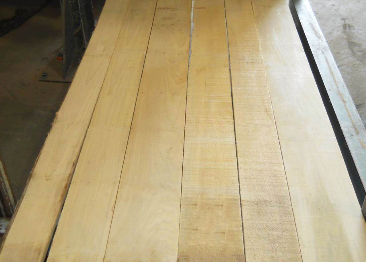 White 1 Face Poplar
