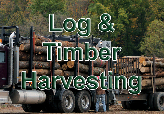 Clendenin-Log-and-Timber-Harvesting