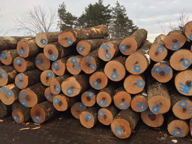 HM-4sc-veneer-logs