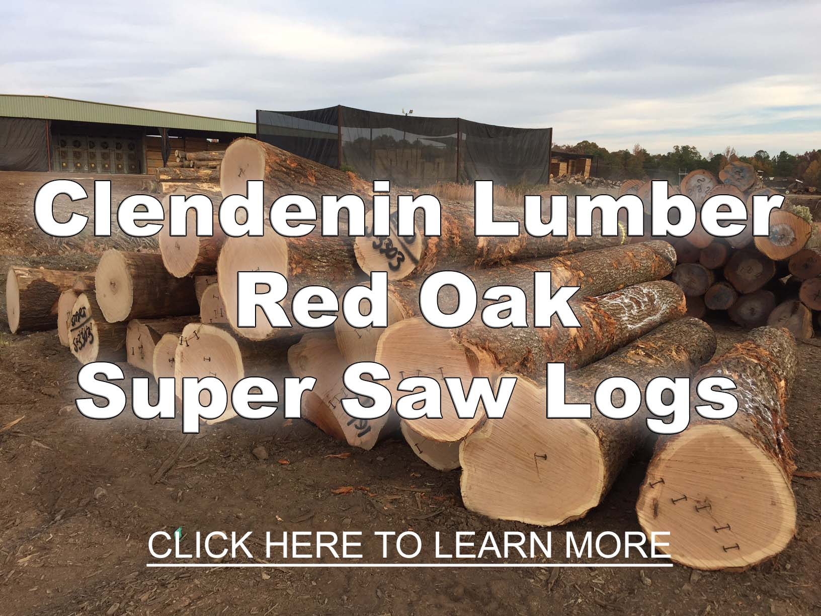 Red Oak Super Saw Log Clendenin