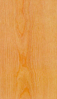yellow birch hardwood lumber for sale