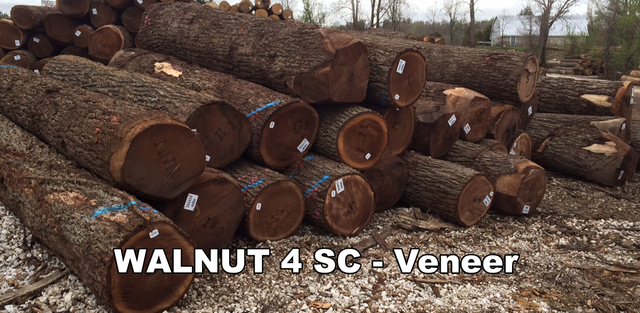 Walnut Logs