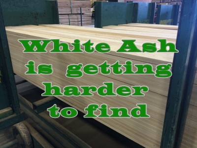 White Ash is Getting Harder to Find