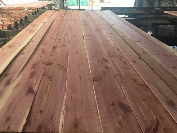 Aromatic Cedar Photo