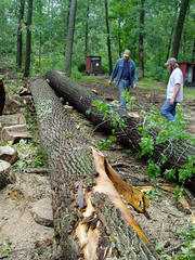logging-hardwoods-in-the-forest