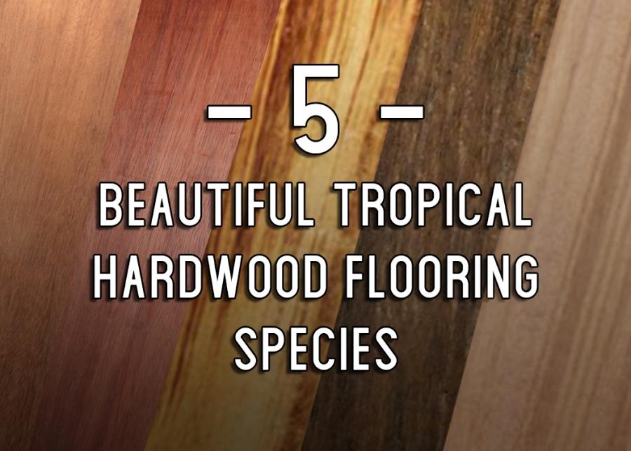 5 Tropical Species That Make For Beautiful Hardwood Flooring