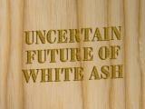 The Uncertain Future of Ash