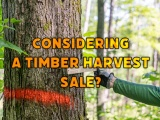 Considering a Timber Harvest Sale? These tips might help